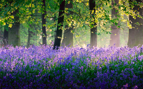 trees, Flowers, SPRING, May, forest, Bells, England, nature, light