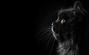cat, background, black background, silhouette