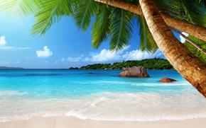 Palme, mare, tropici, isola, oceano, sole, spiaggia, sabbia, puntellare