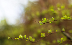 greens, light, blur, sprigs, young leaves, SPRING, bokeh, sky