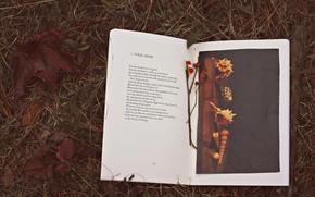 книга, листья, текст, осень