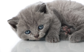 blue eyes, kitten, view, baby, reflection