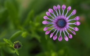 flor, África