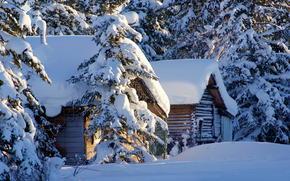 снег, зима, дома, ели
