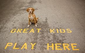 pies, przyjaciel, droga, widok