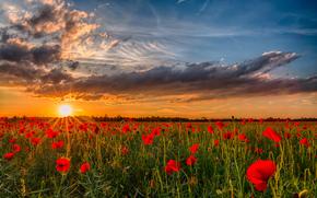 field, DAWN, sunset, photo, nature, Flowers, sun, Poppies