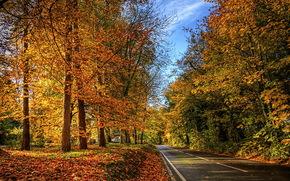 natura, stradale, foto, autunno, fogliame