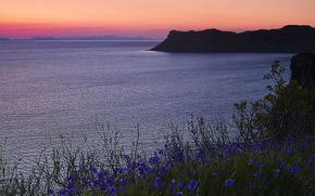 puntellare, Fiori, mare, blu, tramonto