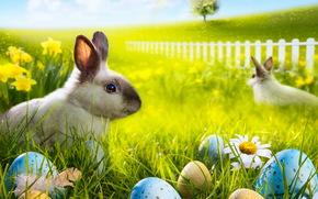 трава, радуга, кролик, ромашки, пасха, цветы, пасхальный, яйца, луг, весна