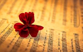 bokeh, music, flower