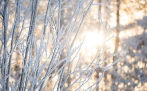 光, BRANCH, 森, 木, 雪, 冬, 自然, 美, 太陽