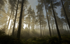 natura, sole, foresta, alberi, chiaro
