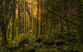 forest, light, nature, stones, moss