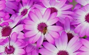 Flores, volar, flora