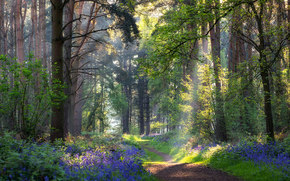 summer, footpath, Flowers, forest