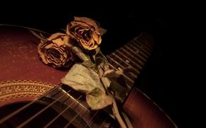 玫瑰, 花卉, 吉他