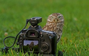 mirar., cámara, hierba, búho