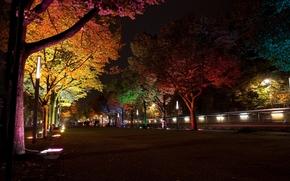 ``Фестиваль света``, ночь, освещение, фонари, лампы, подсветка, деревья, Берлин, Германия, улица, аллея, город