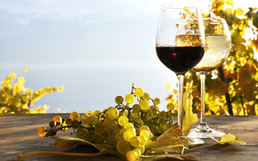 grapes, foliage, vineyards, White, red, wine, table