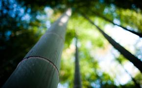 бамбук, ствол, природа, дерево, фокус