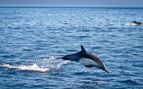 海, イルカ, 自然