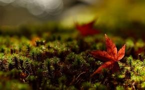 листья, листочек, широкоформатные, трава, обои, красный, листик, зелень, полноэкранные, макро, широкоэкранные, фон