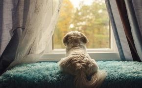 przyjaciel, okno, pies, widok