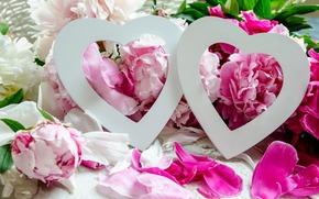 праздник, пионы, любовь, цветы, сердечки
