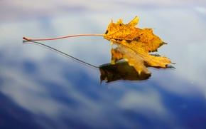широкоформатные, вода, широкоэкранные, фон, отражение, макро, листочек, небо, полноэкранные, обои, листик