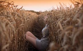 girl, shelter, field, ears of corn