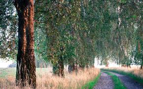 route, arbres, matinée, herbe, été