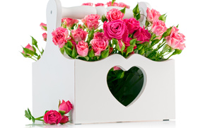 pink roses, Roses, Flowers