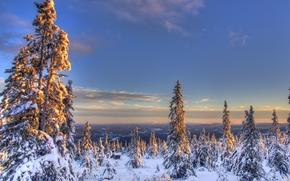 nevicata, inverno, abete rosso, Norvegia