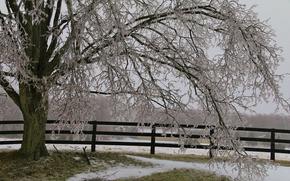 Icicles, snow, ice, fence, tree