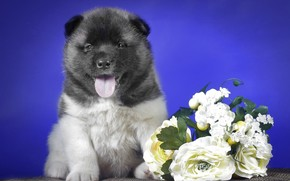 boné, Flores, cachorro