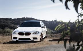bianco, vista frontale, BMW, BMW, fogliame