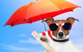 recreación, silla, gafas, perro, naturaleza, paraguas