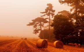paisaje, PAJA, naturaleza, trigo, campo, niebla, ver, cielo, pacas