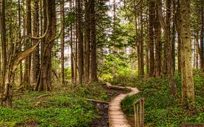 floresta, árvores, ponte, pavimentação, natureza