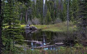 Glacier National Park, pond, forest, trees, landscape