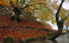 autumn, river, shore, trees, forest, nature