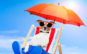 paraguas, naturaleza, perro, gafas, silla