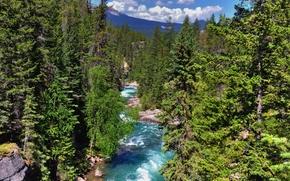 Maligne Canyon, Parco nazionale Jasper, fiume, foresta, paesaggio