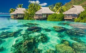 houses, sea, tropics, beach, Palms