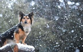 friend, snow, view, dog