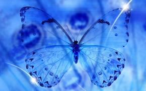 Macro, butterfly, blue, transparency, wings