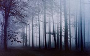floresta, nevoeiro, manhã, TRACK