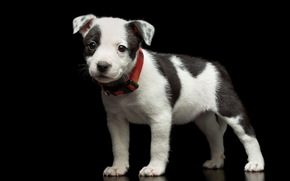 друг, взгляд, собака, щенок