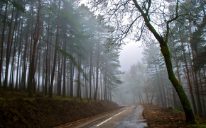 forest, road, fog, autumn
