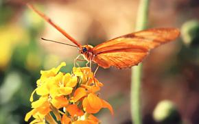 jaune, Orange, fond, papillon, fleur